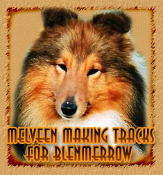 Melveen Making Tracks for Blenmerrow