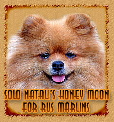 personal page Solo Natalis Honey Moon for Rus Marlins