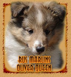 Rus Marlins Oliver Queen